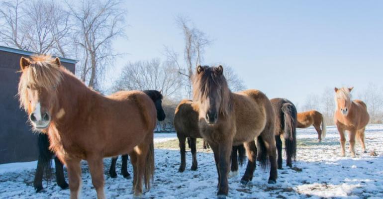 Cornell Vet EHV horses.jpg