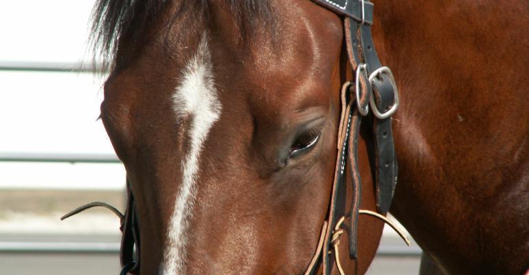 Horse face w white stripe.JPG