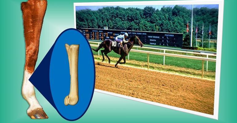 Johns Hopkins Medicine horse bones.jpg