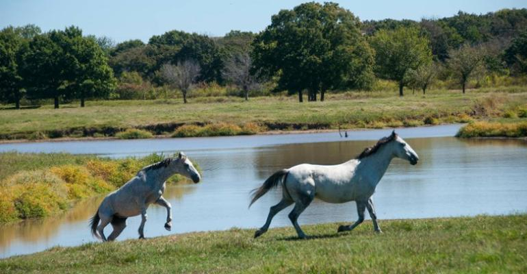 Oklahoma State horses pond.jpg