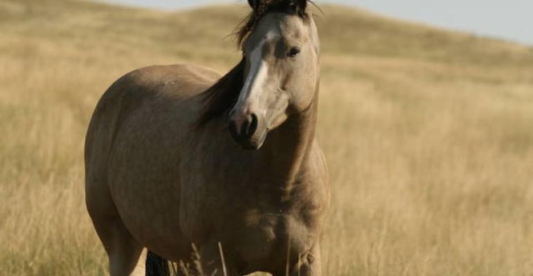 horse large.jpg