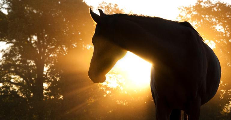 horse silhouette at sunset_shutterstock_62315617.jpg